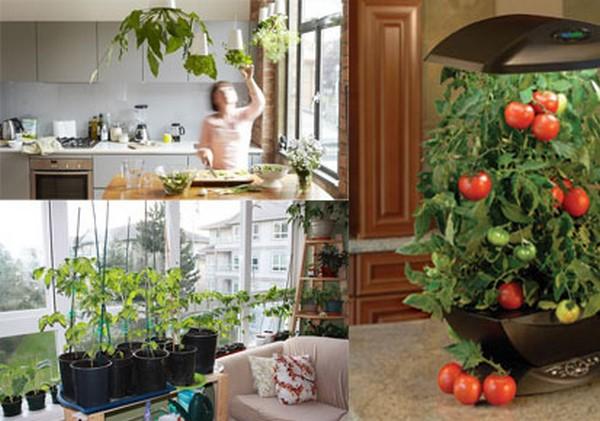 5 Veggies You Can Grow Indoors